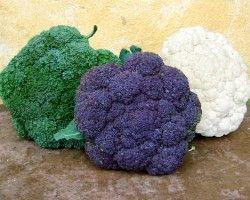 Multicolored cauliflower in green, purple and white.