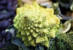 Romanesco Broccoli. Photo  by Aurelien Guichard