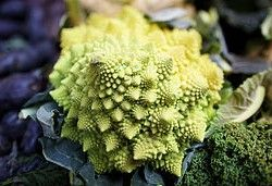 Romanesco Broccoli. Photo  by Aurelien Guichard